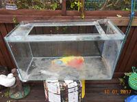 fish tank 36x15x20