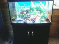3 FT AQUA MARINE 900 AQUA ONE FISHTANK WITH BLACK MATCHING CABINET IN EXCELLENT CONDITION