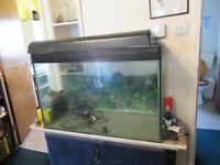 Two good sized fish tanks