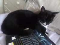 8 month old cute kitten for sale :)