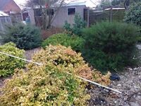 PLANTS AND BUSHES SHRUBS FREE