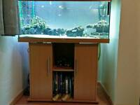 180L fish tank with stand, external Eheim Professional 3e filter and fish
