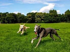 Dandy Dog Walks - Professional dog walker. Dog walking and pet visiting service.