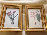 2 Vintage Italian Florentine Gold Gilt Frames Botanical Prints/Art/Picture