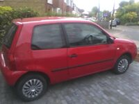 Little Lupo for sale