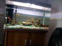 850 Aquarium Fish Tank + Cabinet, complete set with pump lights ornaments heater & 13 fish.