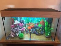 Jewel fish tank , 125 Rio