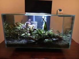 Fluval Edge 23L tank with fish