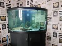 Corner fish tank for sale