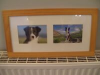"""17"""" X 9"""" teak frame containing 2 Boarder Collie pictures"""