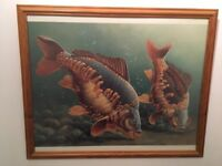 2x Carp picture and frame