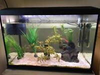 Tropical Fish Tank 70L