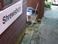 "British Rail ""Shrewsbury"" Sign"