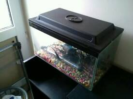 30 liter fishtank with accessories