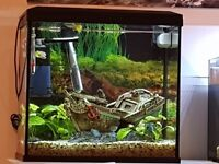 Beautiful fish tank for sale