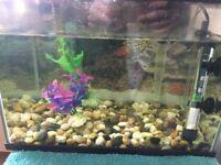 Fish Tank - 20L
