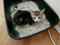 Gorgeous male kitten looking for his forever home