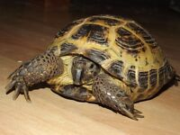 horsefield tortoise comes with complete viv everything you need