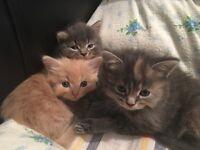 Gorgeous kittens needing forever homes