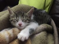 Two male lovely kittens ready for new forever home.