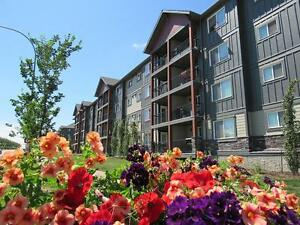 Pet-friendly 1 bedroom apartment for rent in Southwest Edmonton