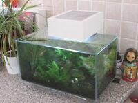 Small Tropical Fish Tank self contained no maintenence