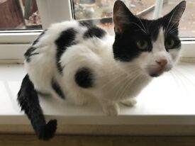 3 yr old Siamese Bailey and spotty boy Pongo