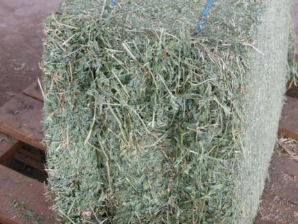 PREMIUM LUCERNE HAY - COMPACT BALES approx 23kg Richmond Hawkesbury Area Preview