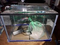 19 litre aquarium, filter and stones