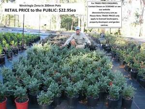 Need GROUND COVER, BORDERS, MASS PLANTING? Prices from $9 HS097 Tallai Gold Coast City Preview