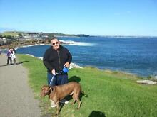 Dog walker needed Randwick Eastern Suburbs Preview