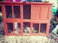 2 rabbits and hutch for sale £130