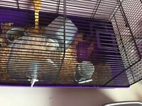 hamster, cage and accessorises