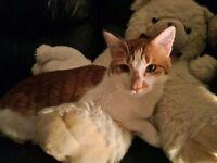 CAT MISSING