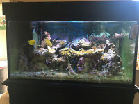 Custom made, mature, marine fish tank, full set up. includes a Dory!