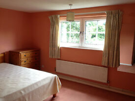A large bedroom available now