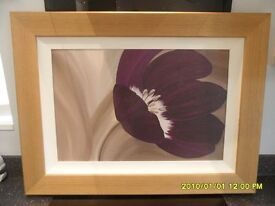 framed print, velvet poppy , m85148, made by complete colour .ltd in very good condition,