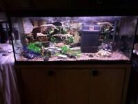 fluval 4ft complete fish tank set up
