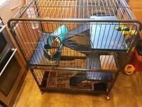 Degu/rat/rodent cage xl