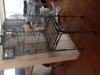 LARGE bird cage with budgies