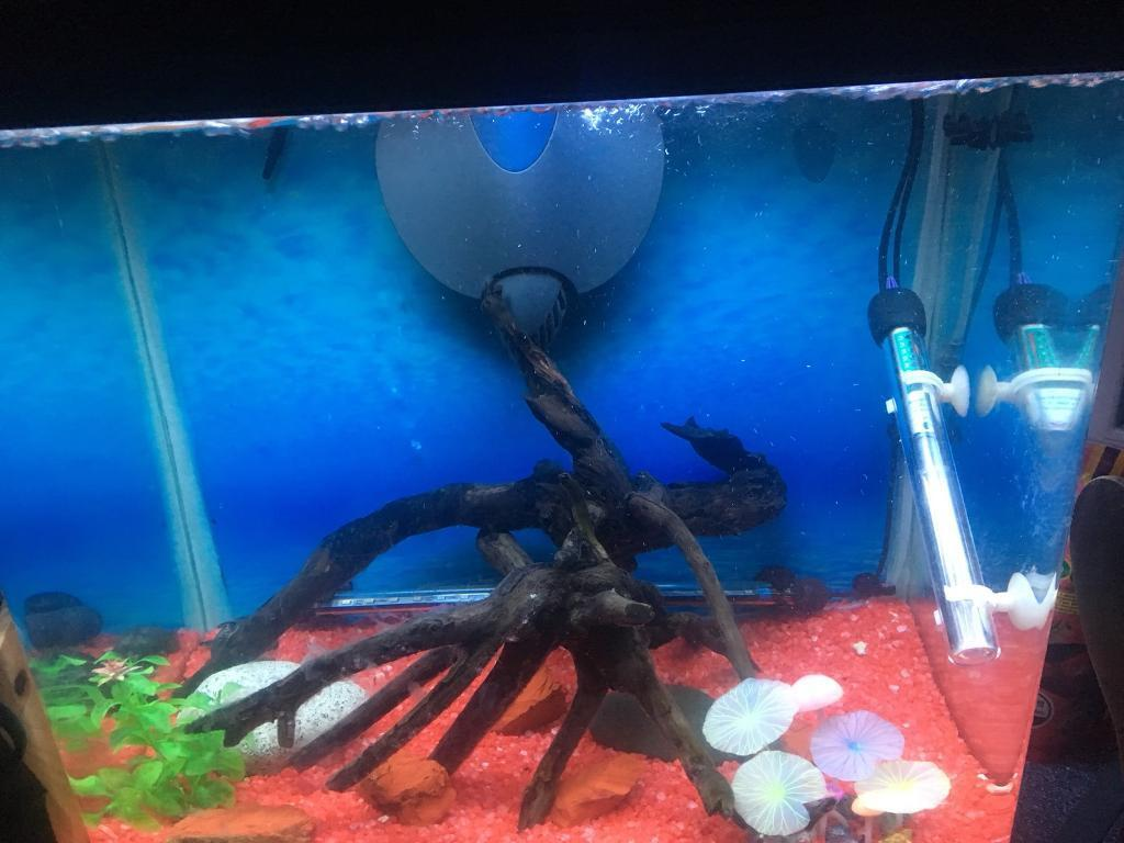 75litre full setup fish tank (willing to sell parts separately)