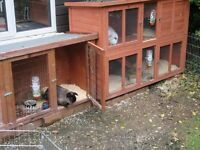 3 Rabbits with hutches and accessories for sale