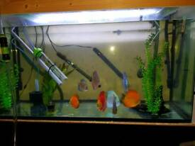 300 litre tank with filter