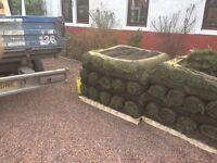 Fresh turf 70 square metres