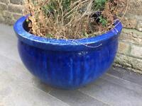 Beautiful Cobalt Blue Ceramic Planter(s) 320mm high x 500mm wide, 2 available