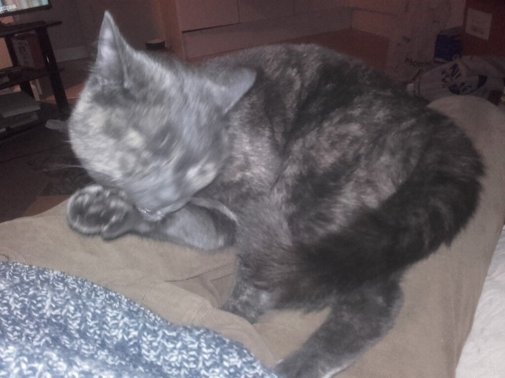 Young female cat needing new home