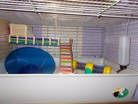 Syrian hamster with £113 worth of supplies. SAVE £38!