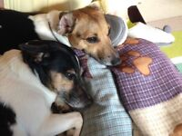 ONE or TWO BED FLAT/HOUSE/GARDEN WANTED. DOGS MUST BE ACCEPTED. HUNSLOW;TWICK;ISLEWORTH;KINGS;RICHM
