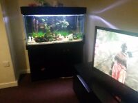 Fish tank with Unit and fish. can deliver