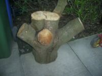 Log ideal to make into garden stool with cup holder or plant holder etc